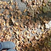 El otoño ha llegado