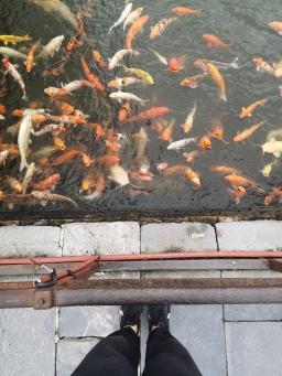 La Ciudadela (Kinh Thanh Hué) 2