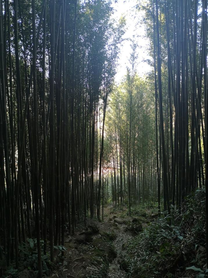 Bosque de bambú 2