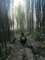 Bosque de bambús